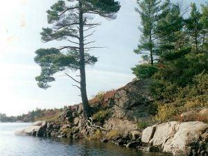 Tree on Broch